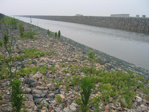 铅丝笼护岸